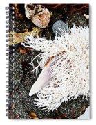 Beach Wares - Shells - Feather Spiral Notebook