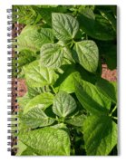 Beans In A Row Spiral Notebook