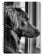 Bear At Window Spiral Notebook
