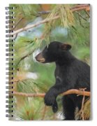 Bear Cub In Tree 2 Spiral Notebook