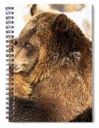 Bear Hug Spiral Notebook