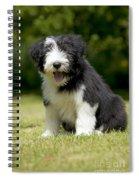 Bearded Collie Puppy Spiral Notebook