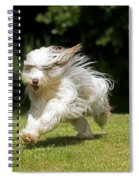 Bearded Collie Running Spiral Notebook