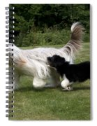 Bearded Collies Playing Spiral Notebook