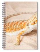Bearded Dragon Pogona Sp. On Sand Spiral Notebook