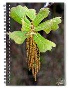 Bearded Oak Spiral Notebook