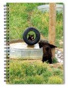Bears At Play Spiral Notebook