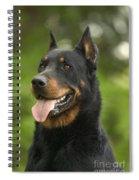 Beauceron Dog Spiral Notebook