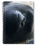 Beaut Spiral Notebook