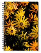 Beautiful African Daisies Spiral Notebook