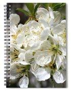 Beautiful Apple Blossoms Spiral Notebook