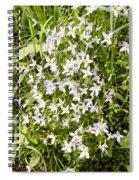 Beautiful Azure Bluets Appalachian Trail Spiral Notebook