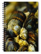 Beautiful Barnicles Spiral Notebook