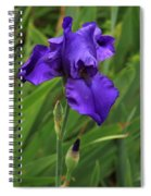 Beautiful Purple Iris Flower Art Spiral Notebook