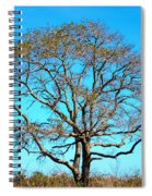 Beautiful Branching Spiral Notebook