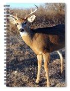 Beautiful Buck Spiral Notebook