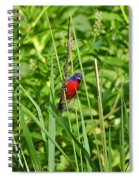 Beautiful Bunting Spiral Notebook