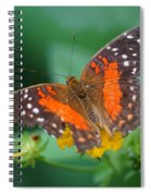 Red Anartia Butterfly 1 Spiral Notebook