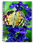Beautiful Butterfly On A Flower Spiral Notebook