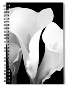 Beautiful Calla Lilies In Black And White Spiral Notebook