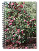 Beautiful Camellia Bush Spiral Notebook
