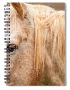 Beautiful Gray Horse Portrait Spiral Notebook