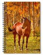 Beautiful Horse In The Autumn Aspen Colors Spiral Notebook