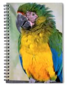 Beautiful Molly Spiral Notebook