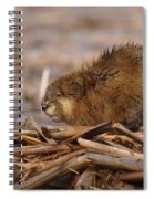 Beautiful Muskrat Spiral Notebook