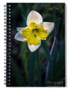 Beautiful Narcissus Spiral Notebook