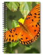 Beautiful Orange Butterfly - Gulf Fritillary Spiral Notebook
