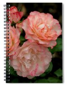 Beautiful Peach Roses Spiral Notebook