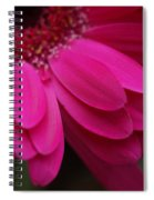 Beautiful Petals Spiral Notebook