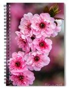 Beautiful Pink Blossoms Spiral Notebook