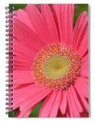 Beautiful Pink Gerber Daisies Spiral Notebook