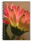 Beautiful Pink Gerbera Daisy 2 Spiral Notebook