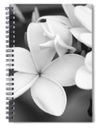 Beautiful Plumeria In Black And White Spiral Notebook