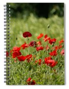 Beautiful Poppies 3 Spiral Notebook