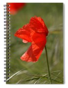 Beautiful Poppies 5 Spiral Notebook