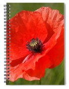 Beautiful Poppies 7 Spiral Notebook