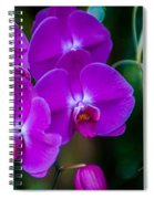 Beautiful Purple Orchid - Phalaenopsis Spiral Notebook