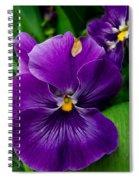 Beautiful Purple Pansies Spiral Notebook