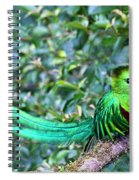 Beautiful Quetzal 3 Spiral Notebook