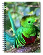 Beautiful Quetzal 5 Spiral Notebook