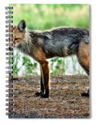 Beautiful Red Fox Spiral Notebook
