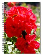 Beautiful Red Roses Spiral Notebook