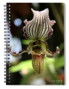 Beautiful Striped Lady Slipper Spiral Notebook