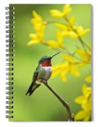 Beautiful Summer Hummer Spiral Notebook