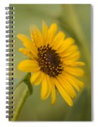 Beautiful Sunflower Spiral Notebook