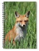 Beautiful Vixen Spiral Notebook